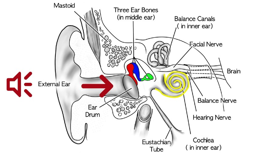 What is Conductive Hearing Loss - How Does Conductive Hearing Loss Occur